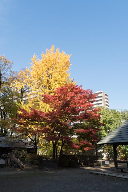 小石川後楽園【団体休憩所近辺の紅葉】1