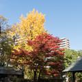 Photos: 小石川後楽園【団体休憩所近辺の紅葉】1