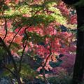 六義園【水香江の紅葉】2