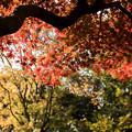 六義園【水香江の紅葉】6
