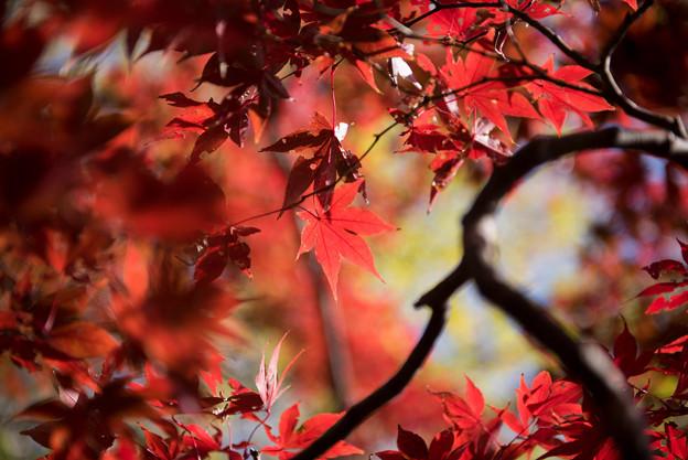 六義園【水香江の紅葉】7