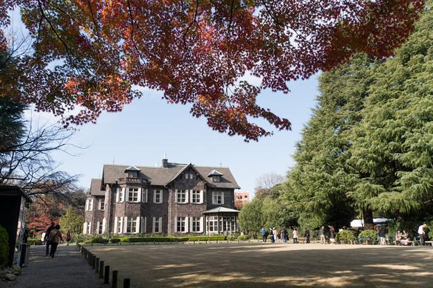 【旧古河庭園の紅葉】1