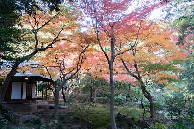 【旧古河庭園の紅葉】3