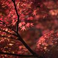 【旧古河庭園の紅葉】7