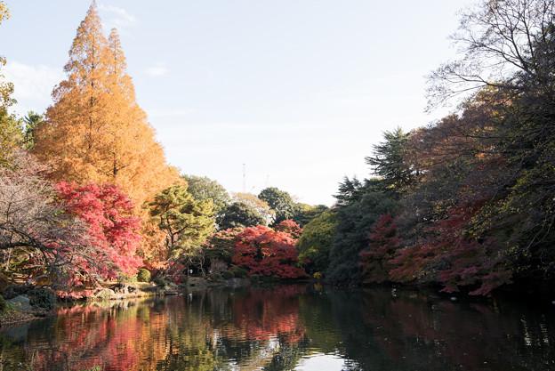 新宿御苑【下の池の紅葉】1