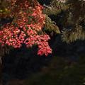 新宿御苑【下の池の紅葉】3