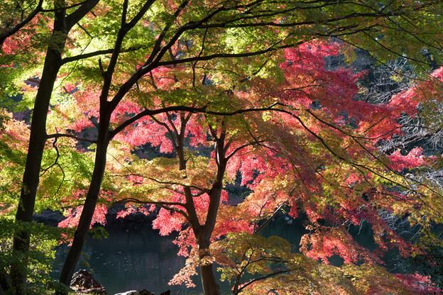 新宿御苑【下の池の紅葉】5