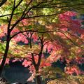 Photos: 新宿御苑【下の池の紅葉】5