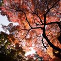 新宿御苑【下の池の紅葉】6