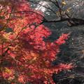 新宿御苑【下の池の紅葉】7