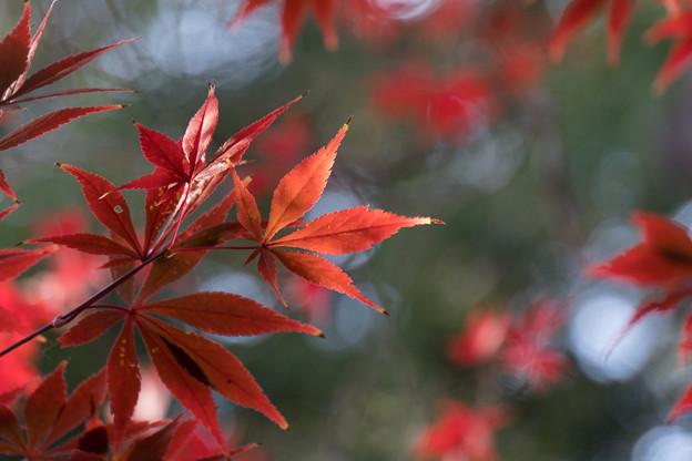 新宿御苑【下の池の紅葉】8