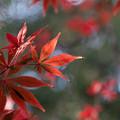 Photos: 新宿御苑【下の池の紅葉】8