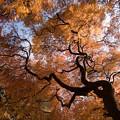 Photos: 新宿御苑【タムケヤマの紅葉】4