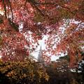 Photos: 新宿御苑【上の池の紅葉】4