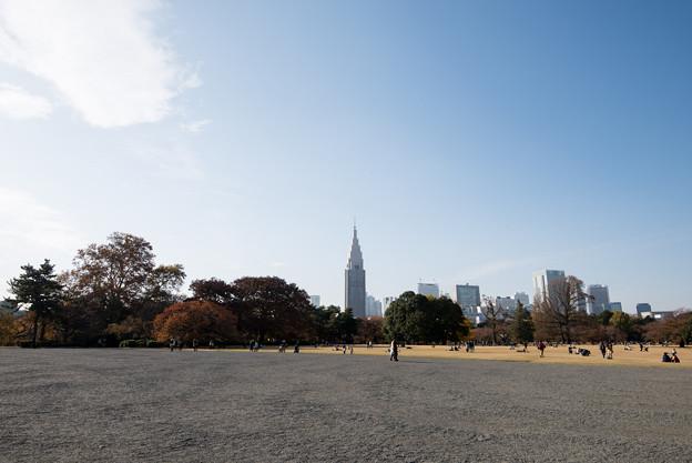 【新宿御苑の眺め】