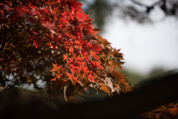 新宿御苑【音羽亭の紅葉】5