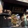 Photos: 【九品仏浄真寺の紅葉】2