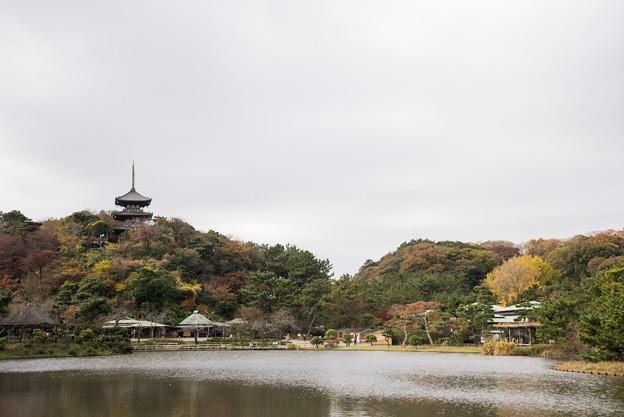 三渓園【大池と三重塔】