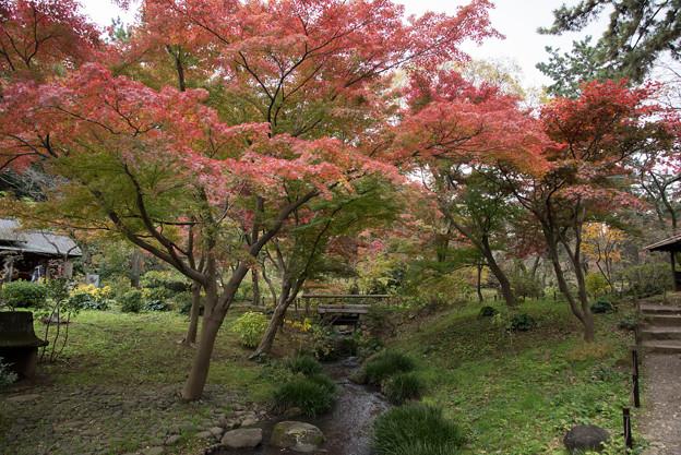 三渓園【待春軒あたりの紅葉】
