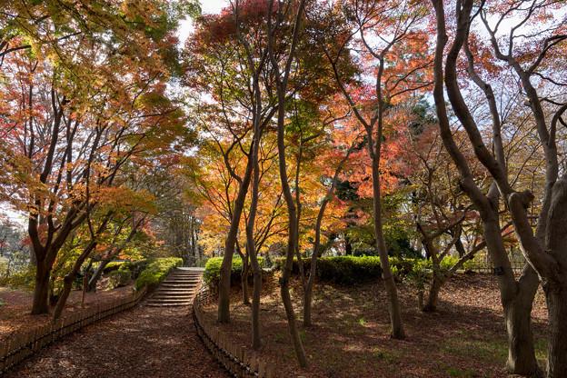 神代植物公園【かえで園の紅葉】1-4