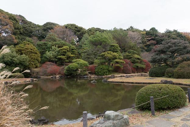 小石川植物園【日本庭園の様子】