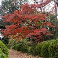 小石川植物園【小道沿いの紅葉】1