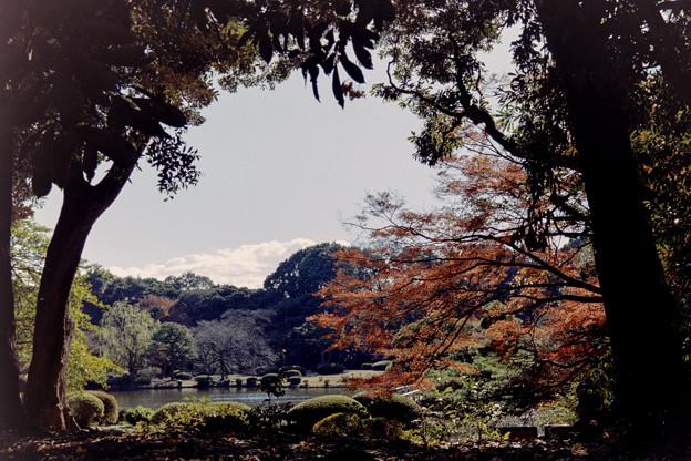 新宿御苑【上の池あたりの紅葉】1