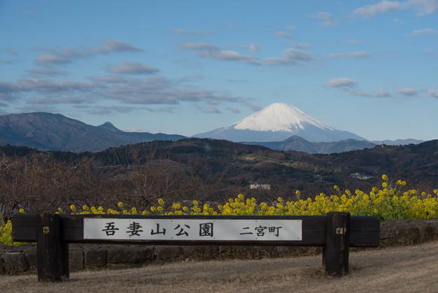 吾妻山公園【菜の花畑と富士山:Nikkor 70-200mm f2.8】1