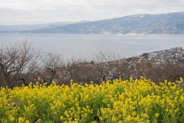 吾妻山公園【菜の花畑:Nikkor 85mm f1.4】5