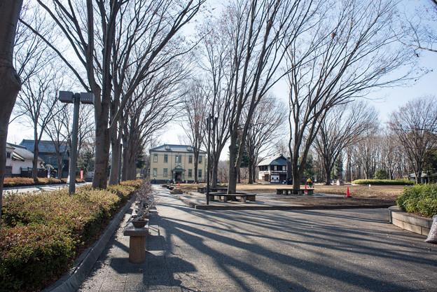 府中市郷土の森博物館【けやき並木】