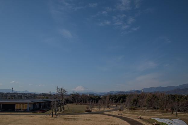 花菜ガーデン【見晴らしデッキから見る富士山】