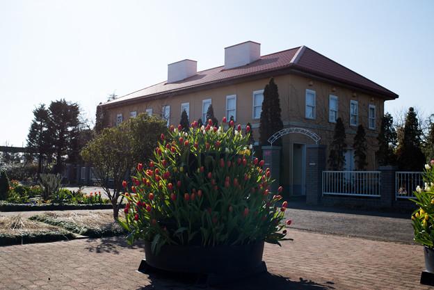 花菜ガーデン【チャペックの家と庭】2