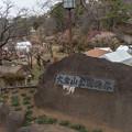 大倉山公園梅林【観梅会の眺め】1