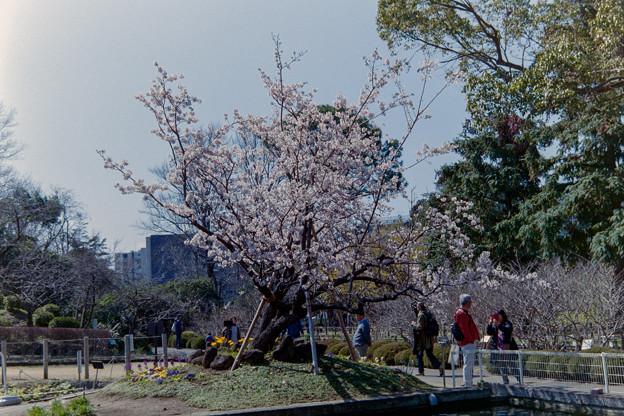 大船FC【桜:玉縄桜の眺め】1銀塩写真