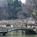Photos: 薬師池公園【満開の梅園】2