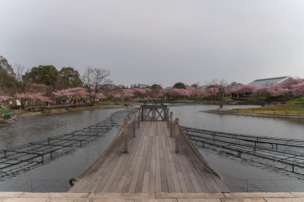 なばなの里【湖周辺の眺め】3