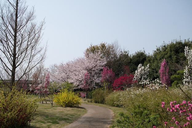 花菜ガーデン【春告げの小道:ハナモモ】4