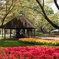 昭和記念公園【渓流広場の眺め】05