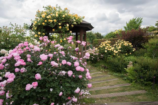 花菜ガーデン【バラ園の眺め】1