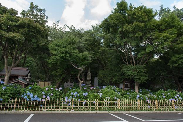 妙楽寺【駐車場からの眺め】1