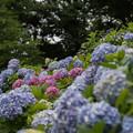 薬師池公園【えびね苑の眺め】2