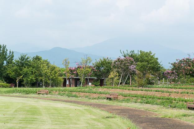 Photos: 花菜ガーデン【芝生広場からの眺め】