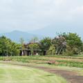 花菜ガーデン【芝生広場からの眺め】
