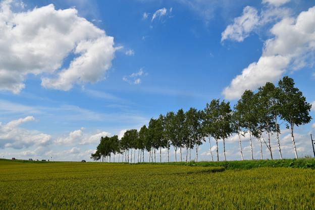富良野の青空