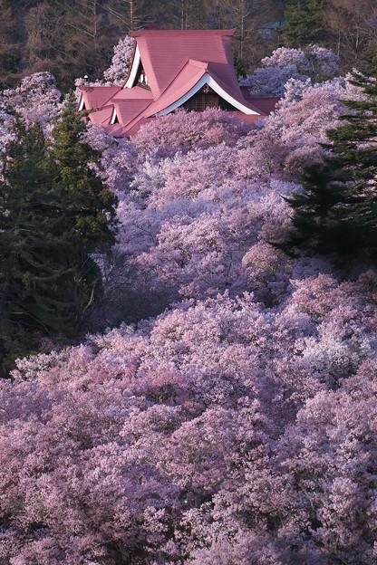 2高遠の桜D5(16.4.8-9) 033