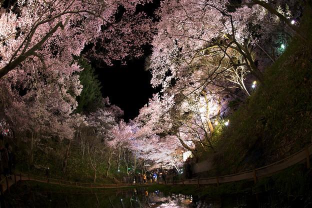 4高遠の桜D5(16.4.8-9) 084