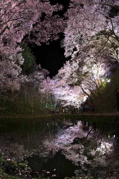 5高遠の桜D5(16.4.8-9) 088
