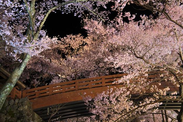 9高遠の桜D5(16.4.8-9) 107