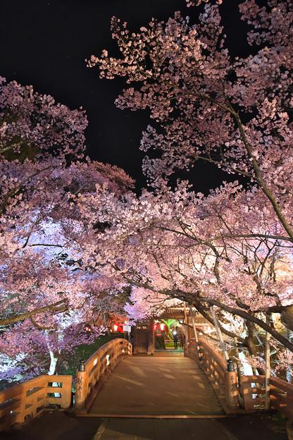 16高遠の桜D5(16.4.8-9) 229