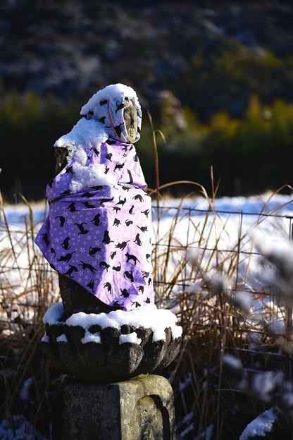 写真: 雪にも負けず